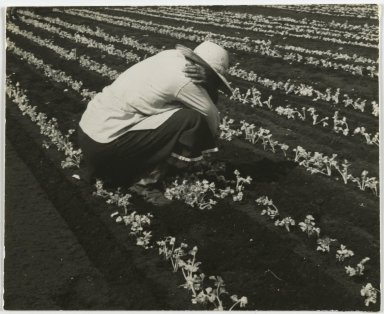 Consuelo Kanaga (American, 1894-1978). <em>[Untitled] (Farm Worker, Florida)</em>, 1950. Gelatin silver photograph, 4 x 4 7/8 in. (10.2 x 12.4 cm). Brooklyn Museum, Gift of Wallace B. Putnam from the Estate of Consuelo Kanaga, 82.65.394 (Photo: Brooklyn Museum, 82.65.394_PS2.jpg)