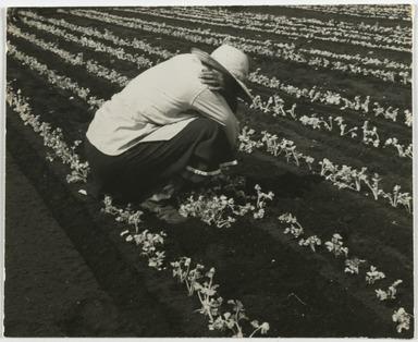 Consuelo Kanaga (American, 1894-1978). <em>[Untitled] (Farm Worker, Florida)</em>, 1950. Gelatin silver photograph, 4 x 4 7/8 in. (10.2 x 12.4 cm). Brooklyn Museum, Gift of Wallace B. Putnam from the Estate of Consuelo Kanaga, 82.65.394 (Photo: Brooklyn Museum, 82.65.394_PS2.jpg)