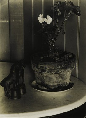 Consuelo Kanaga (American, 1894-1978). <em>House Plant</em>, 1930. Bromide print, 3 7/8 x 2 7/8 in. (9.8 x 7.3 cm). Brooklyn Museum, Gift of Wallace B. Putnam from the Estate of Consuelo Kanaga, 82.65.425 (Photo: Brooklyn Museum, 82.65.425_PS2.jpg)