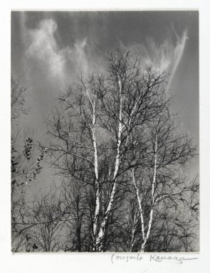 Consuelo Kanaga (American, 1894-1978). <em>[Untitled] (Birches)</em>. Gelatin silver photograph, Image: 4 1/2 x 3 5/8 in. (11.4 x 9.2 cm). Brooklyn Museum, Gift of Wallace B. Putnam from the Estate of Consuelo Kanaga, 82.65.428 (Photo: Brooklyn Museum, 82.65.428_PS2.jpg)