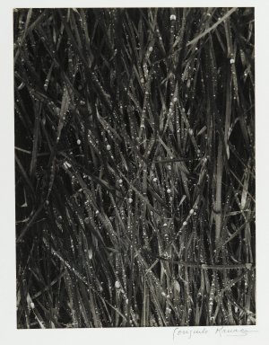 Consuelo Kanaga (American, 1894-1978). <em>[Untitled] (Dew on Grass)</em>. Gelatin silver photograph, Image: 9 1/4 x 7 in. (23.5 x 17.8 cm). Brooklyn Museum, Gift of Wallace B. Putnam from the Estate of Consuelo Kanaga, 82.65.429 (Photo: Brooklyn Museum, 82.65.429_PS2.jpg)