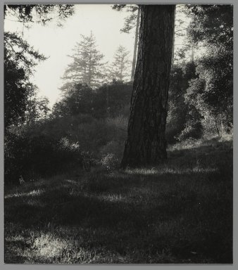 Consuelo Kanaga (American, 1894-1978). <em>[Untitled] (Tree Trunk with Landscape)</em>. Gelatin silver photograph, 7 1/2 x 6 3/4 in. (19.1 x 17.1 cm). Brooklyn Museum, Gift of Wallace B. Putnam from the Estate of Consuelo Kanaga, 82.65.438 (Photo: Brooklyn Museum, 82.65.438_PS2.jpg)