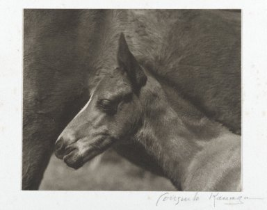 Consuelo Kanaga (American, 1894-1978). <em>[Untitled] (Colt's Head)</em>. Gelatin silver photograph, Image: 3 5/8 x 4 3/4 in. (9.2 x 12.1 cm). Brooklyn Museum, Gift of Wallace B. Putnam from the Estate of Consuelo Kanaga, 82.65.446 (Photo: Brooklyn Museum, 82.65.446_PS2.jpg)