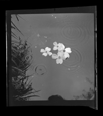 Consuelo Kanaga (American, 1894-1978). <em>[Untitled]</em>. Safety Negative, 2 1/4 x 2 1/4 in. (5.7 x 5.7 cm). Brooklyn Museum, Gift of Wallace B. Putnam from the Estate of Consuelo Kanaga, 82.65.505 (Photo: Brooklyn Museum, 82.65.505.jpg)