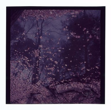 Consuelo Kanaga (American, 1894-1978). <em>[Untitled]</em>. Negative, 2 1/4 x 2 1/4 in. (5.7 x 5.7 cm). Brooklyn Museum, Gift of Wallace B. Putnam from the Estate of Consuelo Kanaga, 82.65.673 (Photo: Brooklyn Museum, 82.65.673.jpg)