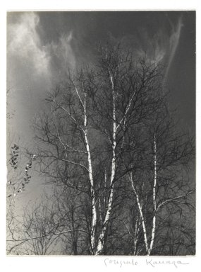 Consuelo Kanaga (American, 1894-1978). <em>Birches</em>, mid 1960s. Gelatin silver photograph, Image: 5 x 3 7/8 in. (12.7 x 9.8 cm). Brooklyn Museum, Gift of Wallace B. Putnam from the Estate of Consuelo Kanaga, 82.65.99 (Photo: Brooklyn Museum, 82.65.99_PS2.jpg)