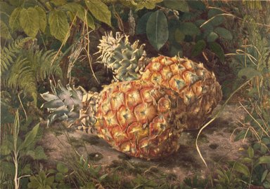 John William Hill (American, 1812-1879). <em>Pineapples</em>, ca. 1864. Watercolor on paper, 10 1/2 x 15 1/8 in. (26.7 x 38.4 cm). Brooklyn Museum, Purchased with funds given by Mr. and Mrs. Leonard L. Milberg, 84.149 (Photo: Brooklyn Museum, 84.149_SL3.jpg)