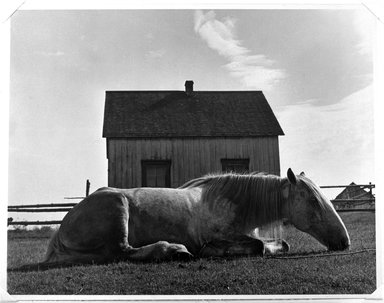 "Walter Rosenblum (American, 1919-2006). <em>""Horse. Gaspe"" Canada</em>, 1951. Gelatin silver photograph, sheet: 11 × 14 in. (27.9 × 35.6 cm). Brooklyn Museum, Gift of Lisa Rosenblum, 84.236.11. © artist or artist's estate (Photo: Brooklyn Museum, 84.236.11_bw.jpg)"