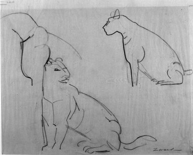 William Zorach (American, born Lithuania, 1887-1966). <em>Pumas</em>, ca. 1940. Graphite on tissue paper, Sheet: 11 3/16 x 14 in. (28.4 x 35.6 cm). Brooklyn Museum, Gift of William Bloom, 84.46.5. © artist or artist's estate (Photo: Brooklyn Museum, 84.46.5_bw.jpg)