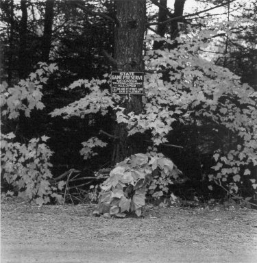 William Wegman (American, born 1943). <em>October 1981, Rangeley, Maine</em>, 1982. Photo-dye transfer print, Sheet: 25 x 20 1/2 in. (63.5 x 52.1 cm). Brooklyn Museum, Gift of the American Art Foundation, 84.82.13. © artist or artist's estate (Photo: Brooklyn Museum, 84.82.13.jpg)