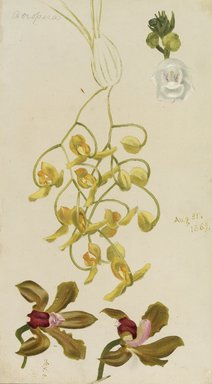 William Jacob Hays (American, 1830-1875). <em>Three Orchids, Acropera, Peristeria Elata, Cattleya Bicolor</em>, 1869. Oil and graphite on canvas, 14 1/2 x 8 1/2 in. (36.8 x 21.6 cm). Brooklyn Museum, Gift of Mr. and Mrs. Leonard L. Milberg, 85.121.2 (Photo: Brooklyn Museum, 85.121.2.jpg)