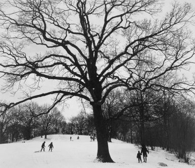 George Forss (American, born 1941). <em>Winter '83 (Prospect Park)</em>, 1983; printed 1985. Gelatin silver photograph, image: 14 1/2 x 17 in. (36.9 x 43.2 cm). Brooklyn Museum, Charles Stewart Smith Memorial Fund, 85.141.9. © artist or artist's estate (Photo: Brooklyn Museum, 85.141.9.jpg)