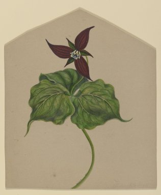H. Lynde. <em>Burgundy Red Flower</em>, 1861. Watercolor on paper Brooklyn Museum, Purchased with funds given by Mr. and Mrs. Leonard L. Milberg, 85.178.1 (Photo: Brooklyn Museum, 85.178.1_PS2.jpg)