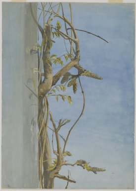 Fidelia Bridges (American, 1834-1923). <em>Wisteria on a Wall</em>, 1870s. Watercolor over graphite on paper, 14 x 10 1/16 in. (35.6 x 25.6 cm). Brooklyn Museum, Gift of Mr. and Mrs. O. Kelley Anderson, Jr., 85.225 (Photo: Brooklyn Museum, 85.225_PS6.jpg)