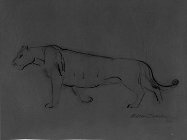 William Zorach (American, born Lithuania, 1887-1966). <em>Lioness</em>, n.d. Graphite on paper mounted to paperboard, Image: 10 7/16 x 13 13/16 in. (26.5 x 35.1 cm). Brooklyn Museum, Gift of Basil Shanahan, 85.22. © artist or artist's estate (Photo: Brooklyn Museum, 85.22_bw.jpg)