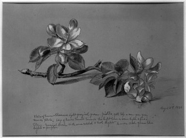 Attributed to possibly Horace Robbins Burdick (American, 1844-1942). <em>Blossoms</em>, 1881. Watercolor, graphite, and possibly charcoal on paper, Sheet (irregular): 8 3/8 x 11 in. (21.3 x 27.9 cm). Brooklyn Museum, Purchased with funds given by Mr. and Mrs. Leonard L. Milberg, 85.83.2 (Photo: Brooklyn Museum, 85.83.2_bw.jpg)