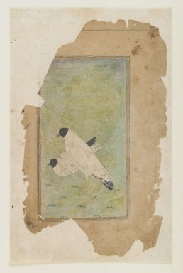<em>Study of a Pair of Doves</em>, ca. 1650. Opaque watercolors on paper, 5 3/4 x 3in. (14.6 x 7.6cm). Brooklyn Museum, Gift of the Ernest Erickson Foundation, Inc., 86.227.152 (Photo: Brooklyn Museum, 86.227.152_IMLS_PS4.jpg)