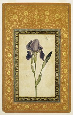 Attributed to Muhammad Zaman (Persian, active 1649-1704). <em>Blue Iris</em>, A.H. 1074-1075/1663-1664 C.E. Ink, opaque watercolor on paper; gilded borders, Sheet: 13 1/16 x 8 3/8 in. (33.2 x 21.3 cm). Brooklyn Museum, Hagop Kevorkian Fund and Special Middle Eastern Art Fund, 86.23 (Photo: Brooklyn Museum, 86.23_IMLS_SL2.jpg)