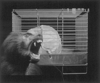 Andres Serrano (American, born 1950). <em>Caged Meat</em>, 1983. Cibachrome print, Sheet: 20 x 24 in. (50.8 x 61 cm). Brooklyn Museum, Gift of the artist, 87.208. © artist or artist's estate (Photo: Brooklyn Museum, 87.208.jpg)