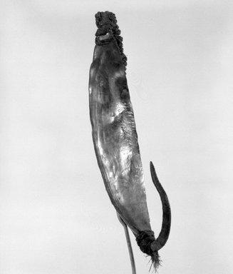 Maori. <em>Fishhook (Matau)</em>. Pāua shell, iron, sennit, 4 1/4 x 7/8 x 1/8 in.  (10.8 x 2.2 x 0.3 cm). Brooklyn Museum, Gift of Marcia and John Friede and Mrs. Melville W. Hall, 87.218.107. Creative Commons-BY (Photo: Brooklyn Museum, 87.218.107_bw.jpg)