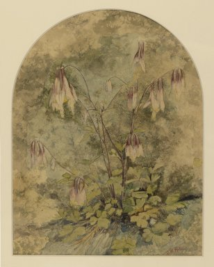 John William Hill (American, 1812-1879). <em>Wildflowers</em>. Watercolor, frame: 16 1/4 x 13 3/4 in. (41.3 x 34.9 cm). Brooklyn Museum, Purchased with funds given by Mr. and Mrs. Leonard L. Milberg, 87.90 (Photo: Brooklyn Museum, 87.90_PS2.jpg)