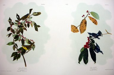 John James  Audubon (American, born Haiti, 1785-1851). <em>Nashville Warbler and Azure Warbler</em>, 1861. Chromolithograph Brooklyn Museum, Gift of Seymour R. Husted Jr., 06.339.11a-b (Photo: Brooklyn Museum, CUR.06.339.11a-b.jpg)