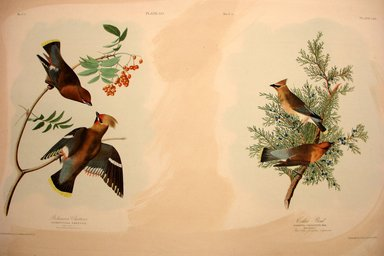 John James  Audubon (American, born Haiti, 1785-1851). <em>Bohemian Chatterer and Cedar Bird</em>, 1861. Chromolithograph Brooklyn Museum, Gift of Seymour R. Husted Jr., 06.339.15a-b (Photo: Brooklyn Museum, CUR.06.339.15a-b.jpg)