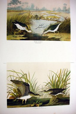 John James  Audubon (American, born Haiti, 1785-1851). <em>Spotted Sandpiper and Solitary Sandpiper</em>, 1861. Chromolithograph Brooklyn Museum, Gift of Seymour R. Husted Jr., 06.339.23a-b (Photo: Brooklyn Museum, CUR.06.339.23a-b.jpg)