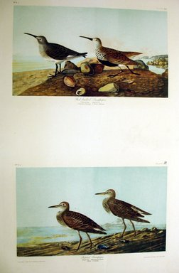 John James  Audubon (American, born Haiti, 1785-1851). <em>Red-backed Sandpiper and Pectoral Sandpiper</em>, 1861. Chromolithograph, Sheet: 40 x 27 1/8 in. (101.6 x 68.9 cm). Brooklyn Museum, Gift of Seymour R. Husted Jr., 06.339.25a-b (Photo: Brooklyn Museum, CUR.06.339.25a-b.jpg)