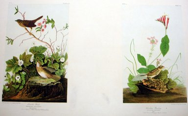 John James  Audubon (American, born Haiti, 1785-1851). <em>Lincoln Finch and Henslow's Bunting</em>, 1861. Chromolithograph Brooklyn Museum, Gift of Seymour R. Husted Jr., 06.339.31a-b (Photo: Brooklyn Museum, CUR.06.339.31a-b.jpg)