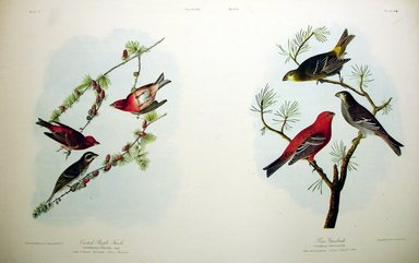 John James  Audubon (American, born Haiti, 1785-1851). <em>Crested Purple Finch and Pine Grosbeak</em>, 1861. Chromolithograph Brooklyn Museum, Gift of Seymour R. Husted Jr., 06.339.35a-b (Photo: Brooklyn Museum, CUR.06.339.35a-b.jpg)