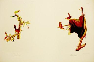 John James  Audubon (American, born Haiti, 1785-1851). <em>Bewick Wren and House Wren</em>, 1861. Chromolithograph Brooklyn Museum, Gift of Seymour R. Husted Jr., 06.339.63a-b (Photo: Brooklyn Museum, CUR.06.339.63a-b.jpg)