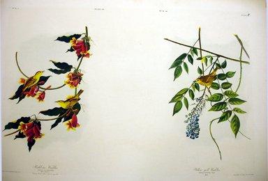John James  Audubon (American, born Haiti, 1785-1851). <em>Rathbone Warbler and Yellow-Poll Warbler</em>, 1861. Chromolithograph Brooklyn Museum, Gift of Seymour R. Husted Jr., 06.339.80a-b (Photo: Brooklyn Museum, CUR.06.339.80a-b.jpg)
