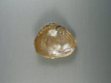<em>1 Valve of Mussel Shell</em>, ca. 4400-3100 B.C.E. Shell, 7/8 x 2 13/16 x 3 7/16 in. (2.2 x 7.1 x 8.8 cm). Brooklyn Museum, Charles Edwin Wilbour Fund, 07.447.771. Creative Commons-BY (Photo: Brooklyn Museum, CUR.07.447.771_view1.jpg)