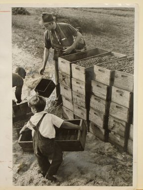 Arthur Rothstein (American, 1915-1985). <em>Child Labor, Cranberry Bog</em>, 1939. Gelatin silver photograph, sheet: 10 x 8 in. (25.4 x 20.4 cm). Brooklyn Museum, Gift of Mitchell F. Deutsch, 1995.206.4 (Photo: Brooklyn Museum, CUR.1995.206.4.jpg)