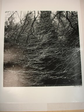 David Akiba (American, born 1940). <em>Arnold Arboretum</em>, 1990. Gelatin silver photograph, image: 10 x 10 in. (25.4 x 25.4 cm). Brooklyn Museum, Gift of David M. Saks and Aron Katz, Brooklyn Museum, by exchange and Alfred T. White Fund, 1996.18.1. © artist or artist's estate (Photo: Brooklyn Museum, CUR.1996.18.1.jpg)