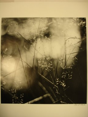 David Akiba (American, born 1940). <em>Olmsted Park, Jamaica Plain (Weeds in Water)</em>, 1990. Gelatin silver photograph, image: 10 x 10 in. (25.4 x 25.4 cm). Brooklyn Museum, Gift of David M. Saks and Aron Katz, by exchange and Alfred T. White Fund, 1996.18.2. © artist or artist's estate (Photo: Brooklyn Museum, CUR.1996.18.2.jpg)