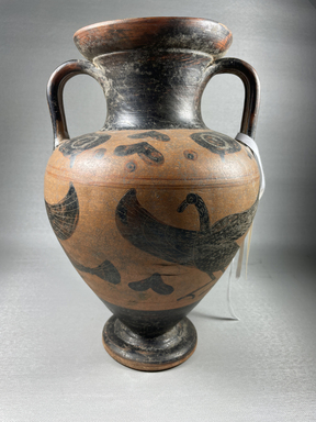 Attributed to Macali Painter. <em>Black-Figure Amphora</em>, 500 B.C.E. Clay, slip, 11 5/8 × Diam. of body 7 1/2 in. (29.5 × 19.1 cm). Brooklyn Museum, Gift of Bianca Olcott, 29.2. Creative Commons-BY (Photo: Brooklyn Museum, CUR.29.2_view01.jpg)
