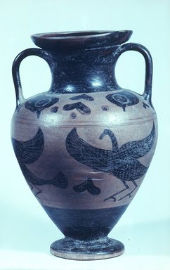 Attributed to Macali Painter. <em>Black-Figure Amphora</em>, 500 B.C.E. Clay, slip, 11 5/8 × Diam. of body 7 1/2 in. (29.5 × 19.1 cm). Brooklyn Museum, Gift of Bianca Olcott, 29.2. Creative Commons-BY (Photo: Brooklyn Museum, CUR.29.2_view1.jpg)