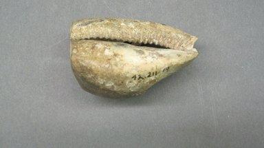 Marquesan. <em>Breadfruit Scraper</em>, before 1938. Shell, 2 9/16 x 2 3/4 in. (6.5 x 7 cm). Brooklyn Museum, A. Augustus Healy Fund, 42.211.19. Creative Commons-BY (Photo: Brooklyn Museum, CUR.42.211.19.jpg)