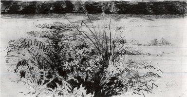 """Cadwallader Washburn (American, 1866-1965). <em>Creek Ferns</em>, 1906. Drypoint on Japanese """"vellum"""", Plate: 6 x 11 15/16 in. (15.3 x 30.3 cm). Brooklyn Museum, Dick S. Ramsay Fund, 52.60.1 (Photo: Brooklyn Museum, CUR.52.60.1.jpg)"""