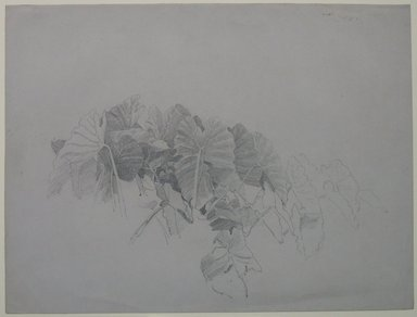 William Trost Richards (American, 1833-1905). <em>Leaves</em>, n.d. Graphite on gray paper, Sheet: 9 1/4 x 12 3/8 in. (23.5 x 31.4 cm). Brooklyn Museum, Bequest of Mrs. William T. Brewster, 53.242.2 (Photo: Brooklyn Museum, CUR.53.242.2.jpg)