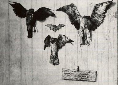 Félix Bracquemond (French, 1833-1914). <em>LeHaut D'un Battant de Porte (Four Birds)</em>, 1852. Etching on laid paper, 12 x 15 7/8 in. (30.5 x 40.3 cm). Brooklyn Museum, Gift of Mrs. Howard M. Morse, 59.53.1 (Photo: Brooklyn Museum, CUR.59.53.1.jpg)