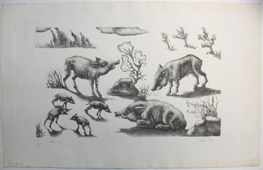 George Biddle (American, 1885-1973). <em>Wild Pigs</em>, 1947. Lithograph, 9 1/2 x 16 1/2 in. (24.1 x 41.9 cm). Brooklyn Museum, Gift of George Biddle, 67.185.40. © artist or artist's estate (Photo: Brooklyn Museum, CUR.67.185.40.jpg)