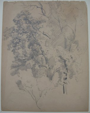 William Trost Richards (American, 1833-1905). <em>Tree Study</em>, June 9, 1853. Graphite on paper, Sheet: 11 7/8 x 9 1/8 in. (30.2 x 23.2 cm). Brooklyn Museum, Gift of Edith Ballinger Price, 72.32.22 (Photo: Brooklyn Museum, CUR.72.32.22.jpg)