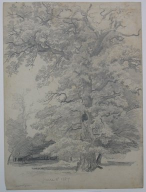 William Trost Richards (American, 1833-1905). <em>Tree Study</em>, June 18, 1867. Graphite on paper, Sheet: 11 13/16 x 8 3/4 in. (30 x 22.2 cm). Brooklyn Museum, Gift of Edith Ballinger Price, 72.32.23 (Photo: Brooklyn Museum, CUR.72.32.23.jpg)
