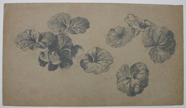 William Trost Richards (American, 1833-1905). <em>Plant Study</em>, n.d. Graphite on tan paper, Sheet: 4 1/2 x 8 in. (11.4 x 20.3 cm). Brooklyn Museum, Gift of Edith Ballinger Price, 72.32.5 (Photo: Brooklyn Museum, CUR.72.32.5.jpg)