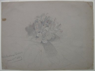 William Trost Richards (American, 1833-1905). <em>Flower Study</em>, June 22, 1869. Graphite with touches of watercolor and Chinese white on gray paper, Sheet: 6 x 8 in. (15.2 x 20.3 cm). Brooklyn Museum, Gift of Edith Ballinger Price, 72.32.8 (Photo: Brooklyn Museum, CUR.72.32.8.jpg)
