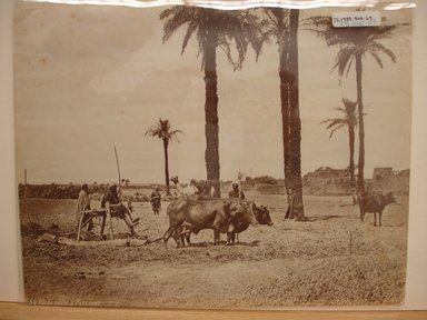 Pascal Sébah (Turkish, 1823-1886). <em>Agricultural Scene; Men with Gamoussa, Egypt</em>, late 19th century. Albumen silver photograph Brooklyn Museum, Gift of Matthew Dontzin, 85.305.27 (Photo: Brooklyn Museum, CUR.85.305.27.jpg)