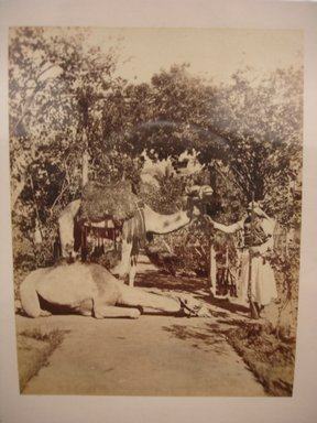 Frank Mason Good (English, 1839-1911). <em>Egyptian Dromedaries</em>, 19th century. Albumen silver photograph, image/sheet: 3 15/16 x 3 in. (10 x 7.6 cm). Brooklyn Museum, Gift of Alan Schlussel, 86.250.40 (Photo: Brooklyn Museum, CUR.86.250.40.jpg)